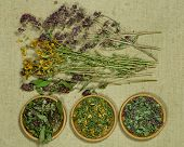 Set Of Healing Herbs. Dried Grass For Use In Alternative Medicine, Spa, Herbal Cosmetics, Herbal Med poster