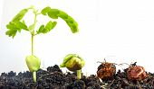Seed To Tree, Seeding, Plant Seed Growing Concept, Agriculture Plant Seeding Growing Step Concept In poster