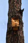 Vogel huis op een boom in een forest.