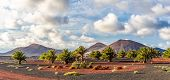 Landscape With Volcanoes Mountain In Timanfaya National Park, Lanzarote, Spain poster