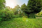 Green Plants In A Park With Green Trees And A Glade In Ivy Leaves With A Sun Flare On The Sky, Nobod poster