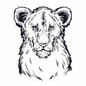 Panthera Leo Vector Baby Tabby Portrait In Closeup Isolated Sketch T-shirt Print, Monochrome. Black  poster