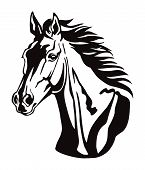 Decorative Monochrome Contour Portrait Of Beautiful Horse With Long Mane Looking In Profile, Vector  poster