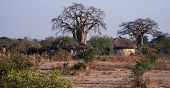 Masai Huts