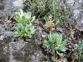 Drought-resistant sedum plants grow on the rocks.