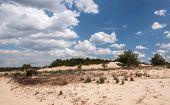 Dune Landscape In The Netherlands
