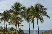 Gorgeous Tropical Landscape View. Green Palm Trees And Plants On Coast Line. Amazing Turquoise Water poster