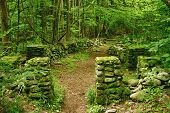 stock photo of gatlinburg  - Old house foundation remains in the woods of Gatlinburg - JPG