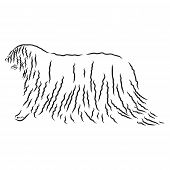 The Komondor , Also Known As The Hungarian Sheepdog, Is A Large, White-coloured Hungarian Breed Of L poster