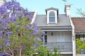 Typical Historical Australian Building With Flowering Jacaranda Tree At The Foreground poster