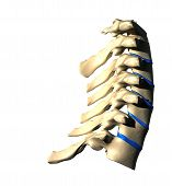 Cervical Spine - Lateral view / Side view