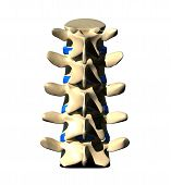 Lumbar Spine - Posterior view / Back view