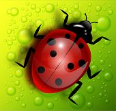 image of water bug  - Vector ladybird on green background with water drops - JPG