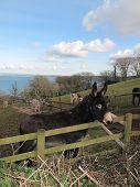 Donkey Seascape