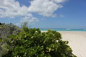 Beach Plants with Cloud Formation and Blue Caribbean Sea at Shoal Beach in Anguilla