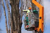 stock photo of chainsaw  - A worker with a chainsaw trim the tree branches on the high - JPG