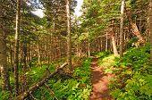 Wanderweg durch einen Küstenwald