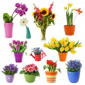 pic of vase flowers  - Flower collection isolated on white background - JPG