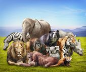 image of ape  - Group of animals on grass - JPG