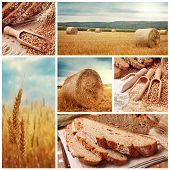 stock photo of dry grass  - Bread and harvesting wheat collage - JPG