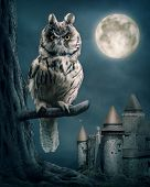 stock photo of snow owl  - Owl bird sitting on branch at night - JPG