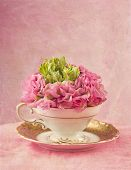Ranunculus flower in a tea cup