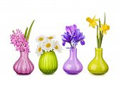 Spring flowers in vases isolated on white background
