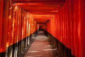 foto of inari  - A long walkway through a passage made of closely packed torii gates - JPG