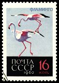 Vintage  Postage Stamp. Greater Flamingos.