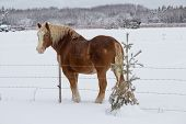 A horse by a fence