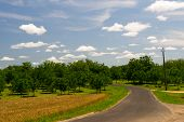 Orchard with walnut trees in French Dordogne