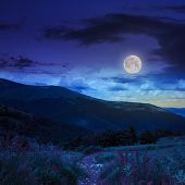 pic of moon-flower  - trail with red flowers near the lawn of high green grass in the shade of a mountain with pine forest at night in moon light - JPG