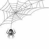picture of black widow spider  - Black scary spider insect with web background vector illustration - JPG