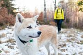 Woman Hiking In Winter Forest With Dog