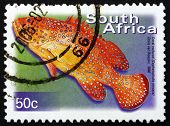 Postage Stamp South Africa 2000 Coral Rockcod, Marine Fish