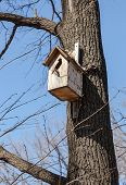foto of nesting box  - Wooden nesting box on the tree in spring