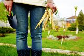 pic of hoe  - Midsection of woman holding bunch of freshly harvested vegetables and a hoe in garden - JPG