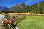 Rural pastoral. Farm fields separated from the dirt road the low fence made �?�¢??�?�¢??of lo