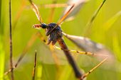 foto of mayfly  - A mayfly in the sun grass a summer day - JPG
