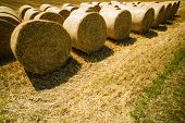 bales of straw and grain occur after harvest on a field
