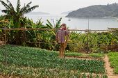 stock photo of lantau island  - Vegetable garden with a scarecrow at Lantau island Hong Kong - JPG
