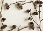 Pine Cones On Wooden Background