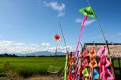 color kite and blue sky