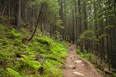 Beautiful Green Mysterious Forest With A Footpath