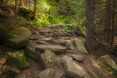 Beautiful Mysterious Forest With Large Mossy Stones