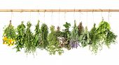 stock photo of oregano  - fresh herbs hanging isolated on white background - JPG