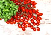 Fresh Basil Plant And Cherry Tomatoes. Food Background