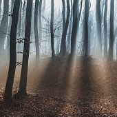 dark dreamy forest with fog