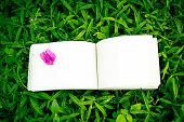 Diary On The Grass