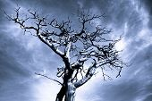 Dramatic Photo Of A Dead Tree
